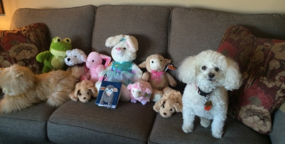 Cookie posing with Toy Mountain toys April 3, 2016